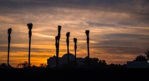 Solnedgång och kontur av palmträd royaltyfri fotografi
