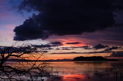 Solnedgång och konturträdet fotografering för bildbyråer