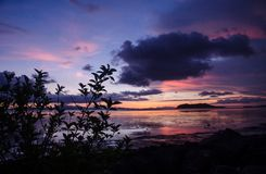 Solnedgång och konturträdet royaltyfri foto