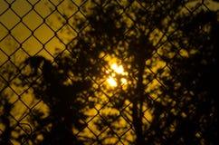 Solnedgång och maskrosor till och med ett staket Arkivfoto