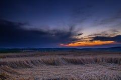 Solnedgång och mognat korn Arkivfoto