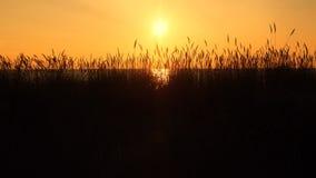 Solnedgång och oragehimmel Arkivbild