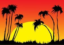 Solnedgång och palmträd Arkivfoton