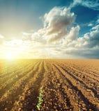 Solnedgång och plogat fält Royaltyfria Bilder