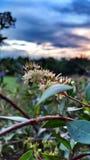 Solnedgång och skog fotografering för bildbyråer