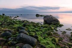 Solnedgång och stenig strand för mossiga stenar Arkivbilder