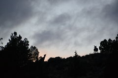 Solnedgång och storm med hjortskuggor Royaltyfri Foto