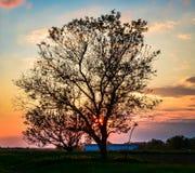 Solnedgång och träd i byn Royaltyfri Fotografi