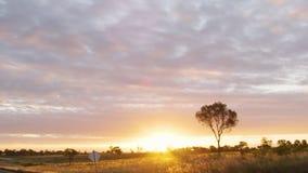 Solnedgång och träd med det gräs- fältet stock video