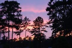 solnedgång och trädkontur Royaltyfri Bild