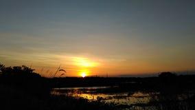 Solnedgång och träsk arkivfoton