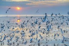 Solnedgång och utvandrande seagulls Fotografering för Bildbyråer