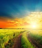 Solnedgång och väg i gröna fält Arkivbild
