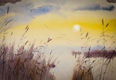 Solnedgång och vasser Arkivbild