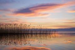 Solnedgång och vasser som avspeglar i sjön Arkivbild