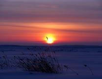 Solnedgång och vitt hav i vintern (Ryssland) Arkivfoton