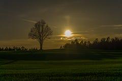 Solnedgång på bergigt fält med det ensamma trädet på horisont Fotografering för Bildbyråer