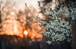 Solnedgång på byn Arkivfoto