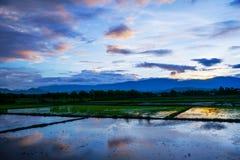Solnedgång på cornfielden Royaltyfri Bild