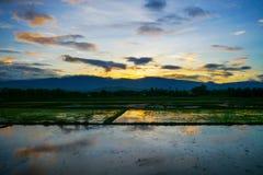 Solnedgång på cornfielden Arkivbild