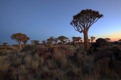 Solnedgång på darrningträdskogen Fotografering för Bildbyråer