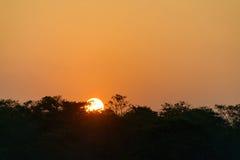 Solnedgång på den Chitwan djungeln Arkivbilder