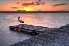 Solnedgång på den långa bryggan, NSW Australien Royaltyfri Foto