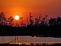 Solnedgång på den nationella djurlivfristaden för Blackwater i Maryland Arkivfoto