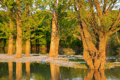 Solnedgång på den Ogosta floden, Bulgarien Royaltyfria Bilder