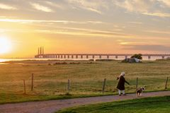 Solnedgång på den Oresund bron arkivbilder