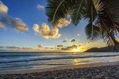 Solnedgång på den tropiska stranden bak palmbladet, anseintendance, seych royaltyfri fotografi