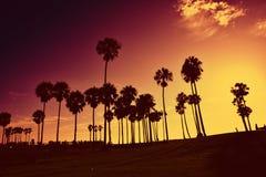 Solnedgång på den Venedig stranden, Kalifornien, USA royaltyfria bilder