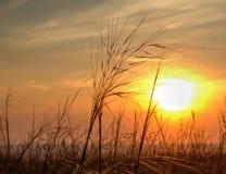 Solnedgång på det jordbruks- fältet Fotografering för Bildbyråer
