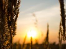 Solnedgång på det jordbruks- fältet Arkivfoto