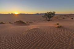 Solnedgång på dyn för Kalahari öken royaltyfri fotografi