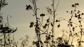 Solnedgång på en äng i sommaraftonen stock video