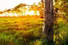 Solnedgång på en äng nära Marcardsmoor Royaltyfria Bilder