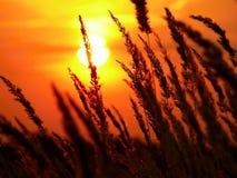 Solnedgång på en bakgrund av fältet Arkivbilder