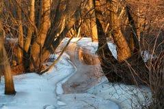 Solnedgång på en brookside med röda målade träd och is på brooken arkivfoton