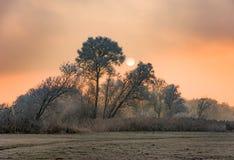 Solnedgång på en dimmig vinterdag med frostade träd Royaltyfri Bild