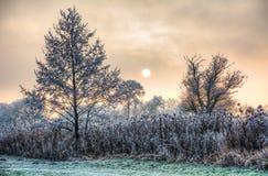 Solnedgång på en dimmig vinterdag med frostade träd Arkivbild