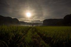 Solnedgång på en ricefield Fotografering för Bildbyråer