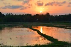 Solnedgång på en risfält Peka av interst i Vietnam vietnam Fotografering för Bildbyråer