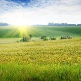 solnedgång på ett fjäderfält Fotografering för Bildbyråer