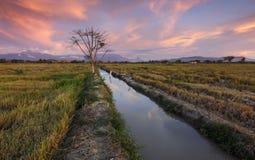 Solnedgång på ett gräsfält i Kota Belud, Sabah, Malaysia royaltyfri fotografi