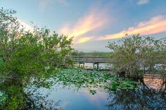 Solnedgång på Evergladesnationalparken Arkivfoto