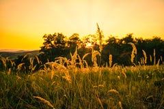 Solnedgång på fält Royaltyfria Bilder
