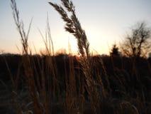 Solnedgång på fält Arkivfoto