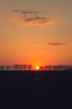Solnedgång på fältet Royaltyfri Bild