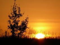 Solnedgång på fältet i Ukraina Royaltyfri Fotografi